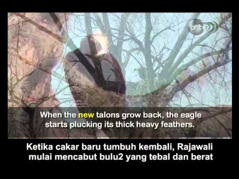 Story of an Eagle – Motivationals Clips