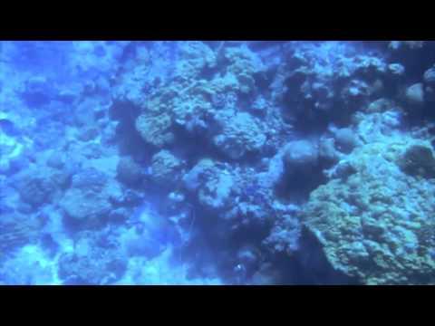 Spearfishing / Chasse sous-marine au Vanuatu
