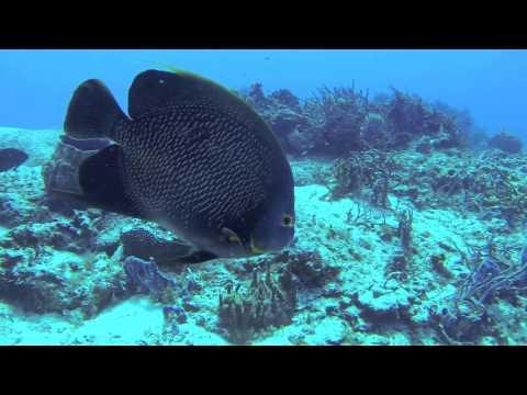 Dive Trip Mexico 2013