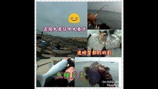線西第八支堤岸附近釣魚(海釣篇)fish/asa/磯釣