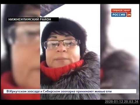Бездомных собак массово отравили в Железногорске Илимском