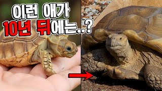 이 거북이가 10년뒤에는 사람도 태우고다닌다는거 믿을수…