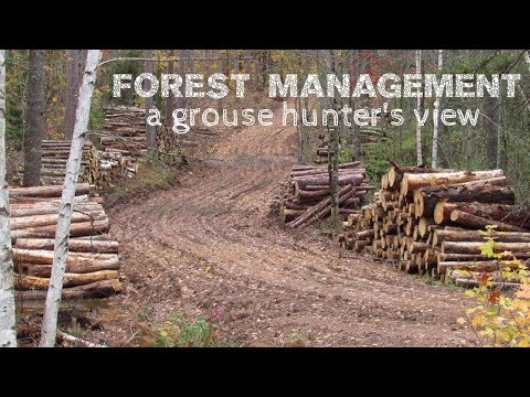Forest Management | A Ruffed Grouse Hunter's View