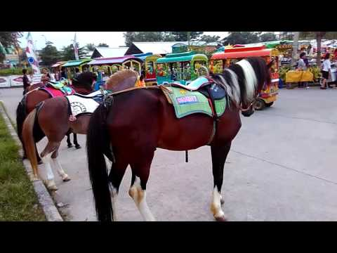 Anak bayi naik kuda