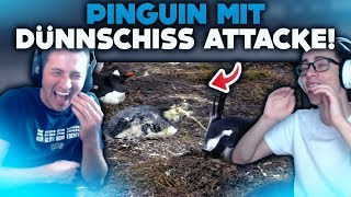 WÄH! 🤢 PINGUIN MIT DÜNNSCHISS ATTACKE! 😝 | WTF Videos
