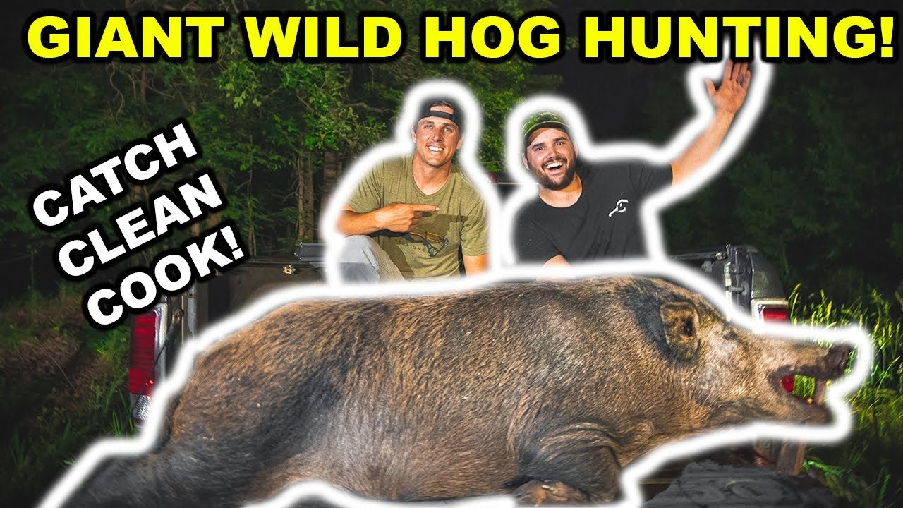 Hunting the WORLD's LARGEST Wild Hogs at NIGHT!!! (OPEN FIRE Catch Clean Cook)