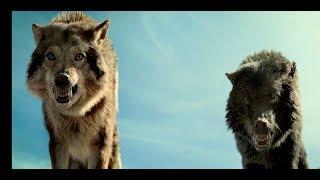 Нападение стаи волков.   | Альфа