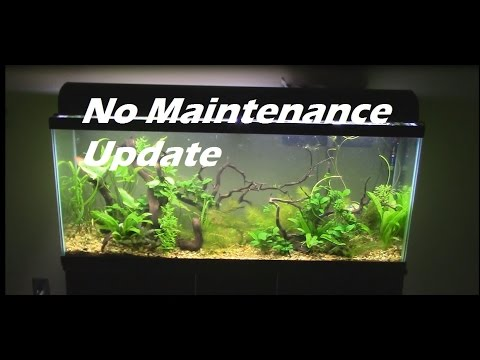 No maintenance tank 55 gallon aquarium setup update youtube for Plants that need no maintenance