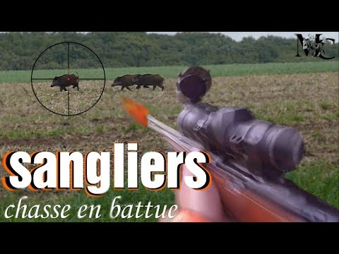 BATTUE AUX GRANDS GIBIERS !  tir de 3 sangliers 2017 HD