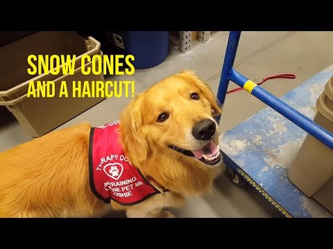 GOLDEN RETRIEVER GETS A HAIRCUT AND SNOW CONE | Oshies World