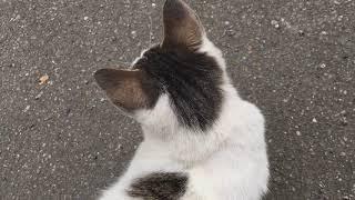 瑞芳の人懐っこい猫青少年 thumbnail