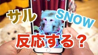 写真アプリ「SNOW」はおサルさんでも反応するのか!?