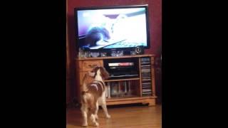 Welsh Springer Spaniel Puppy Watching Tv