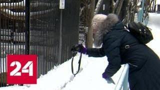 Новосибирская пенсионерка ведет видеоканал с зарисовками о жизни животных - Россия 24