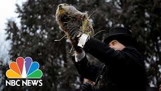 Punxsutawney Phil Gives His Groundhog Day Prediction | NBC News (Live Stream Recording)
