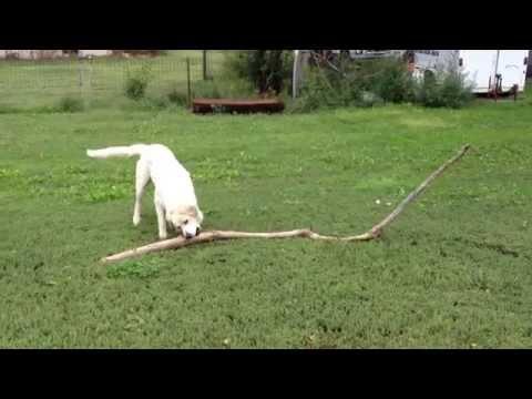 Big Dogs carry Big Sticks