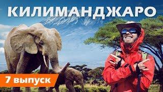 Покоряем самый высокий вулкан в Африке . Килиманджаро с миллионерами . OskolkovTravel .