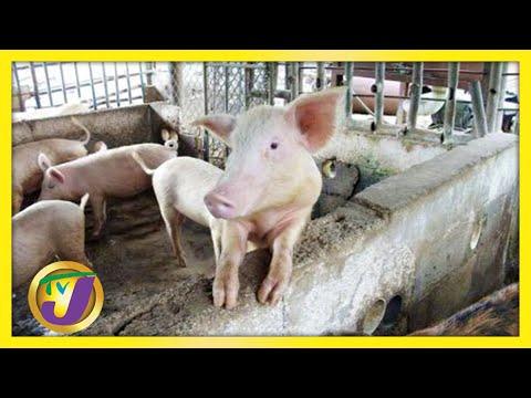 Jamaicans to Brace for Pork Price Increase | TVJ News