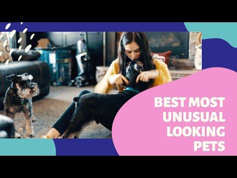 Top10 Most Unusual Looking Pets
