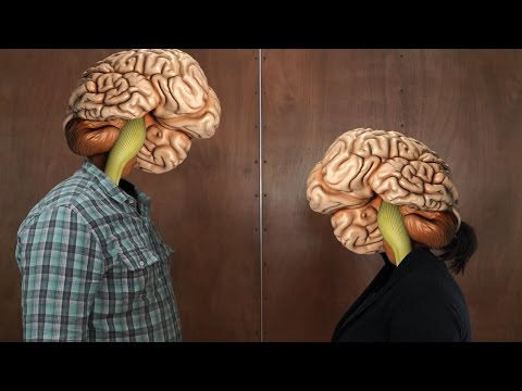 Головной мозг. Вес и размеры мозга. Уровень интеллекта