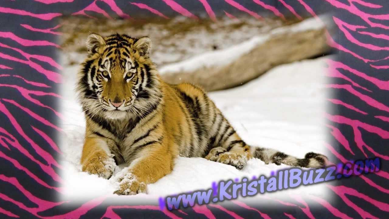 ab2f6aa941c Swarovski Tiger » Kristall Buzz... Swarovski Crystal News Blog by Crystal  Exchange