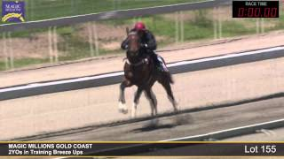 Lot 155 - 2YOs in Training Breezeup Thumbnail