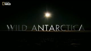 Vahşi Antarktika (Belgesel)