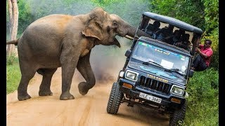 Giant elephant attacks on public area | By The Way Of Facts