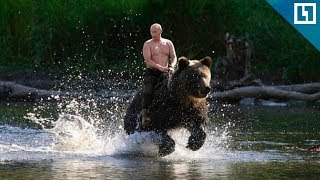 Путин о своих фото «на медведе без рубашки»