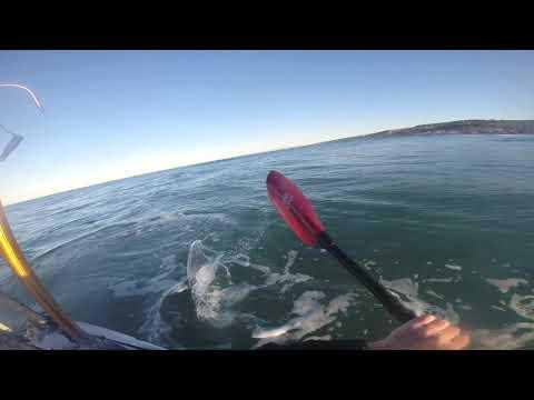 San Diego Kayak Fishing - February 2016 Yellowtail 28lb