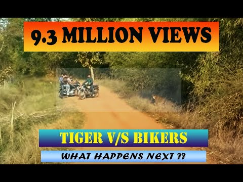 Tadoba Tiger encounter with Bikers