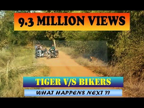 Dangerous encounter - Tadoba Tiger almost attacks Bikers