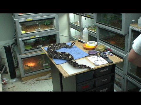 how to clean and disinfect snake enclosure