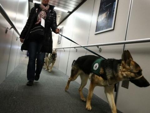 Newark Airport Hosts Guide-Dog Training