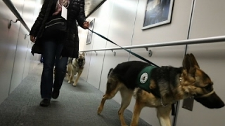 Newark Airport Hosts Guide-Dog Training
