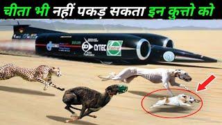 हवा को भी चीरने वाले तेज़ तर्रार कुत्ते 10 fastest dog breeds,expensive dogs,animals,Earth Adventure