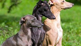 Породы маленьких собачек  4 выпуск    Фото собак