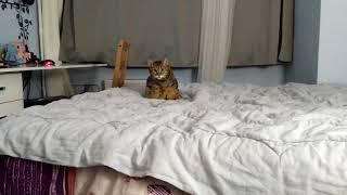 Кошка сидит на КОРТОЧКАХ!