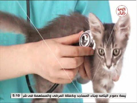 the vet  سقوط الشعر فى القطط  20 10 2016