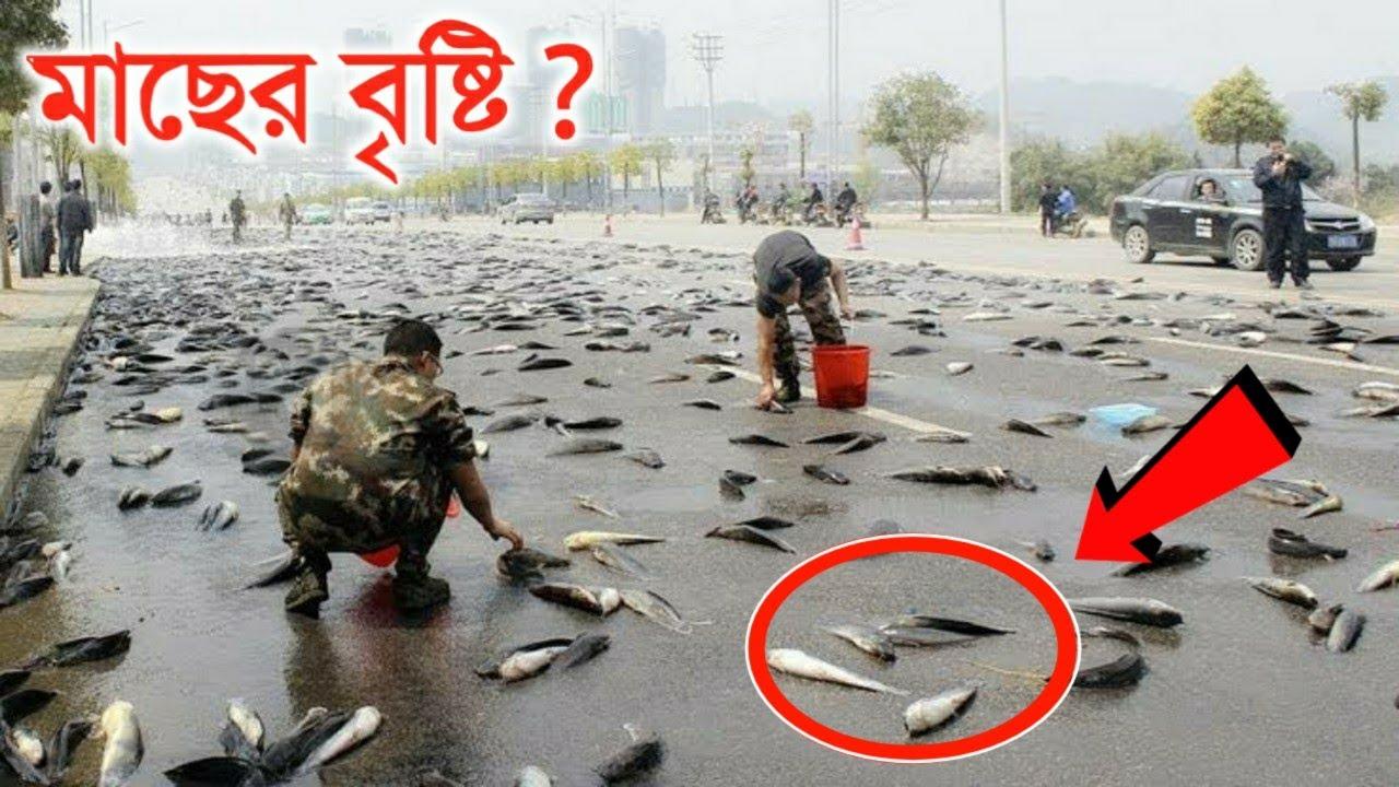 মাছের বৃষ্টি কেন হয় জানলে অবাক হবেন | 5 Most Unusual Rains In The World | Fish rain in Bangla
