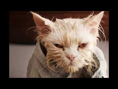 Why Do Cats Hate Water and scared of being wet?  documentary ( Urdu/Hindi) - youtube
