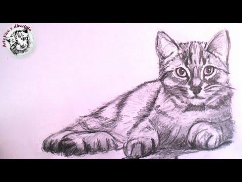 Como Dibujar Un Gato Realista A Lapiz Paso A Paso Rzhachnye Video