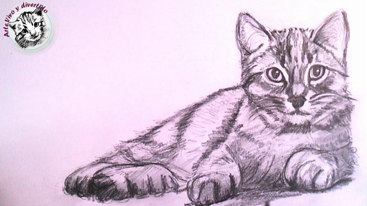 Como Dibujar un Gato Realista a Lapiz Paso a Paso - YouTube
