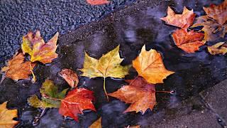 Romantic piano solo, relaxing piano music, classical piano background music, #3 - Quiet autumn
