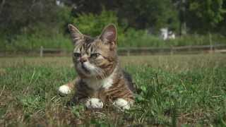 Lil BUB Goes to the Park thumbnail