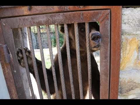 Bear Rescue Wildwood Trust