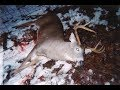 Deer hunting VT,ME, and NH Scouting video