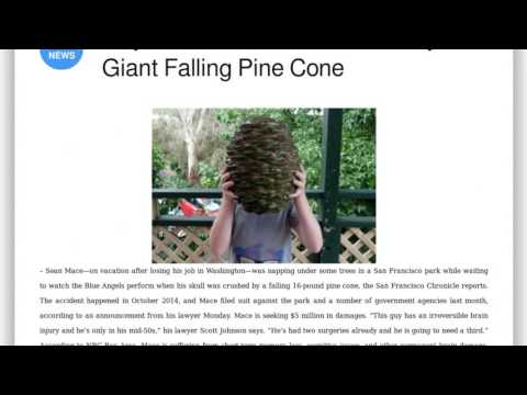 Press review: Guy Sues After Skull Crushed by Giant Falling Pine Cone