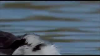 Song Beat | Nashe Si Chad Gyi | Whatsapp Status Video | Befikre | Beautiful Bird Dance