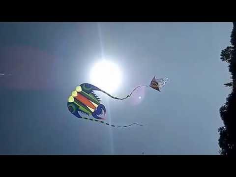 Kites Flying in the Sky of Jamnagar, India Kite Festival